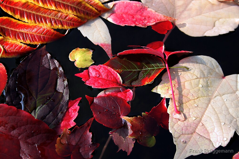 autumn leaves by Frank Brüggemann