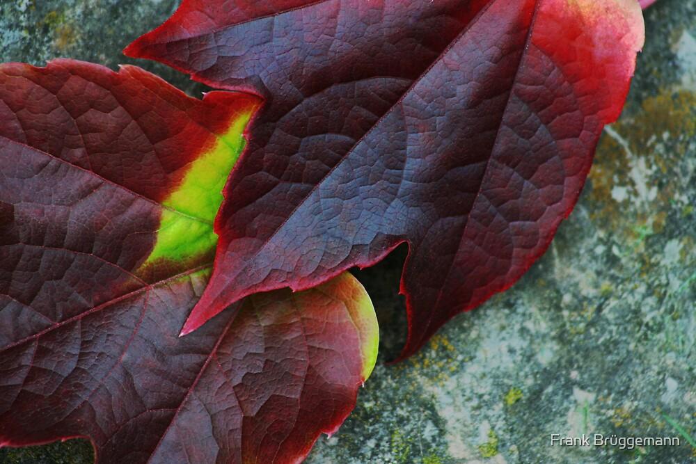 autumn leaves 1 by Frank Brüggemann