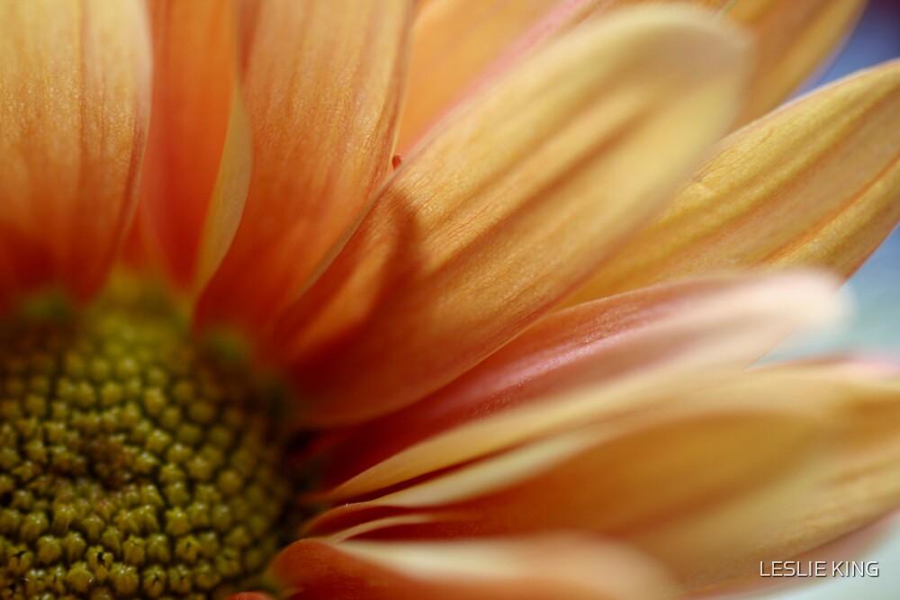 FLOWER IN BLOOM by LESLIE KING