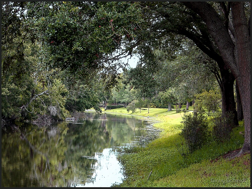 Stream at Sawgrass Park by Ginny Schmidt