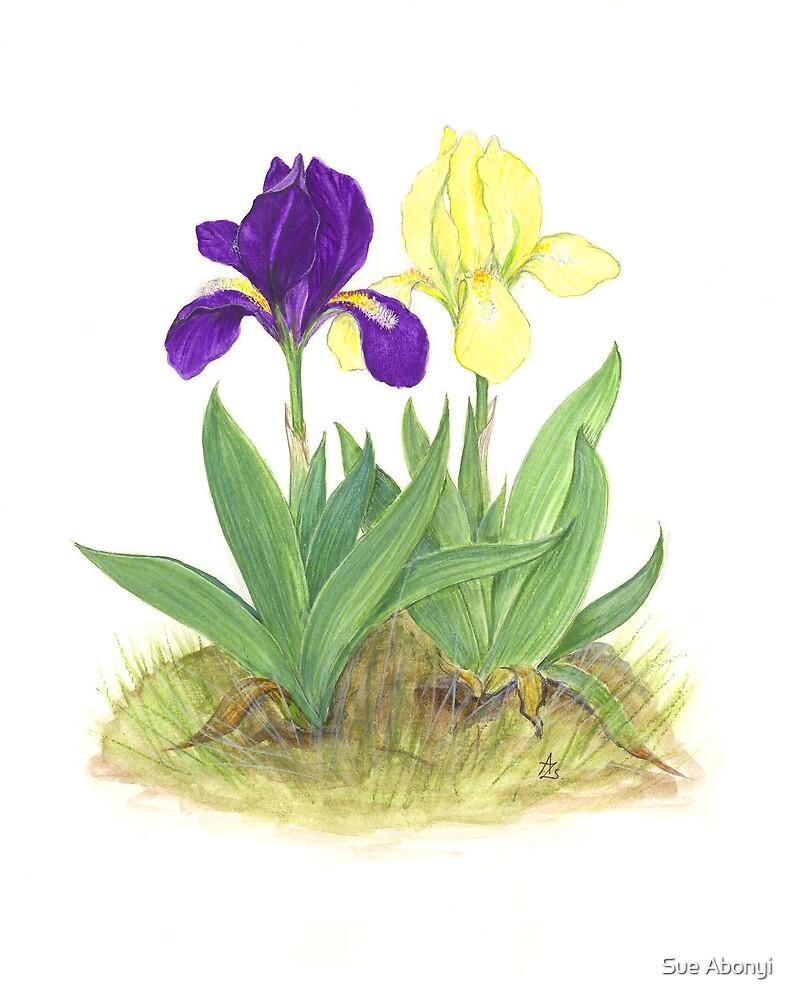 Dwarf Iris - Iris pumila by Sue Abonyi
