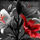 Red And Black by Ann Chane