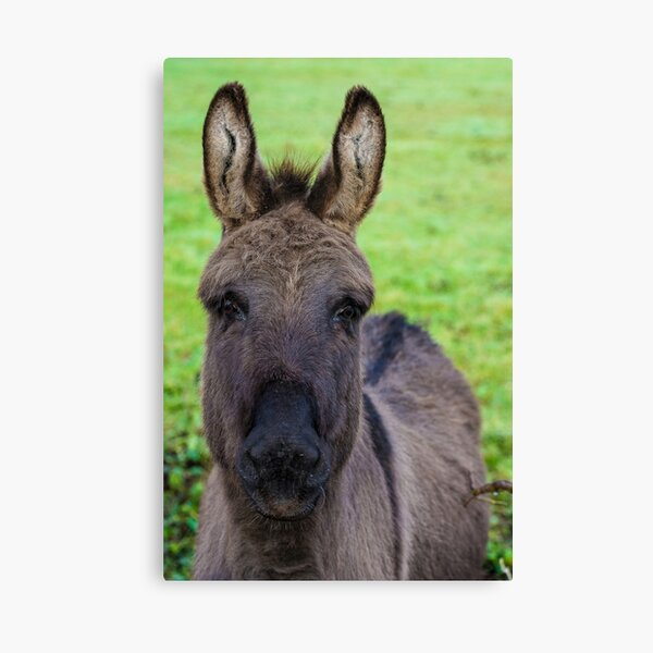 Donkey Poster Canvas Print