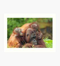 mother orangutan with her cute babies  Art Print