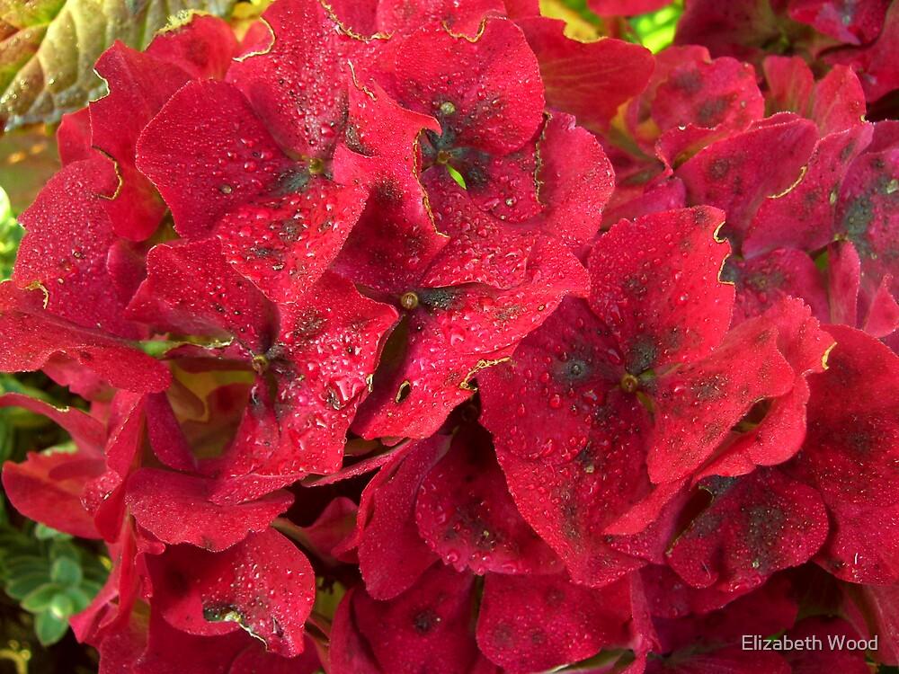 Wet Morning Flowers by Elizabeth Wood