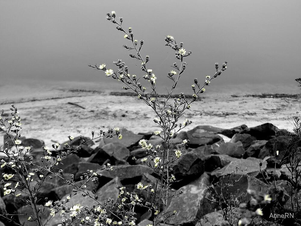 little flowers by AnneRN