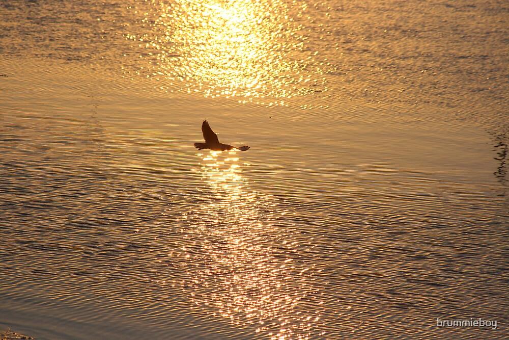 Golden flightpath .... by brummieboy