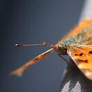 Butterfly by smileyjustforyou