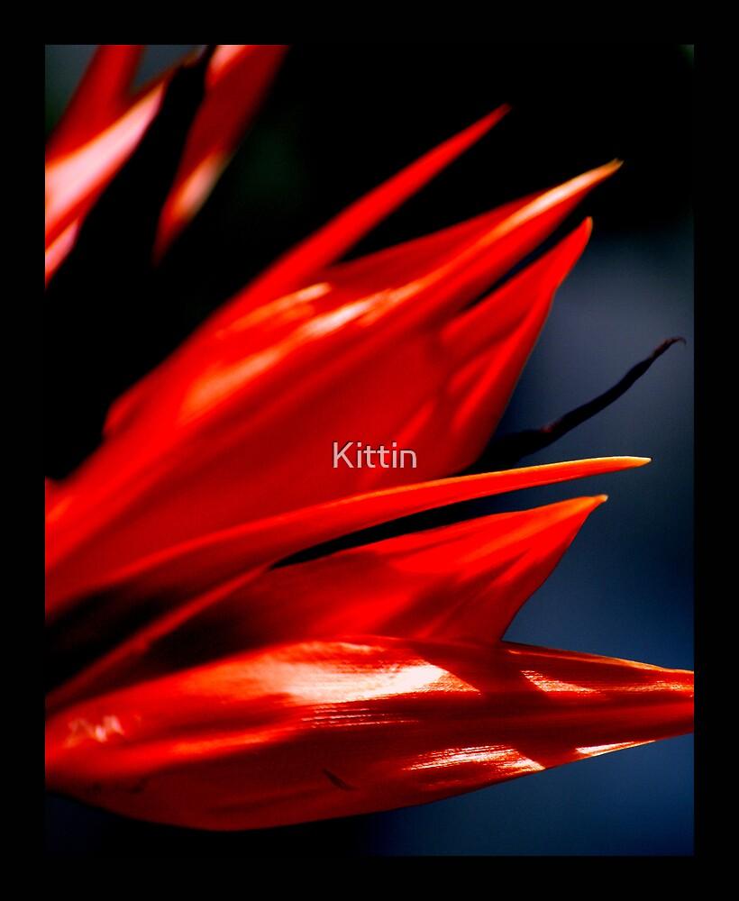 Bird of paradise 01 by Kittin