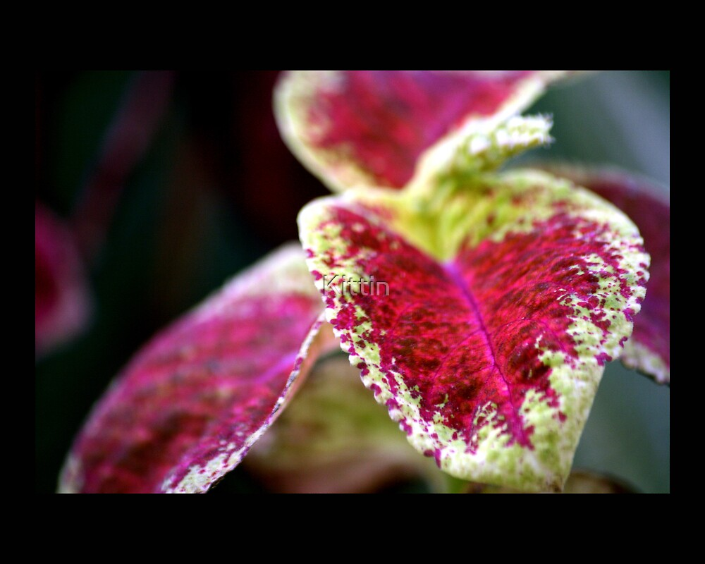 Leaves 01 by Kittin