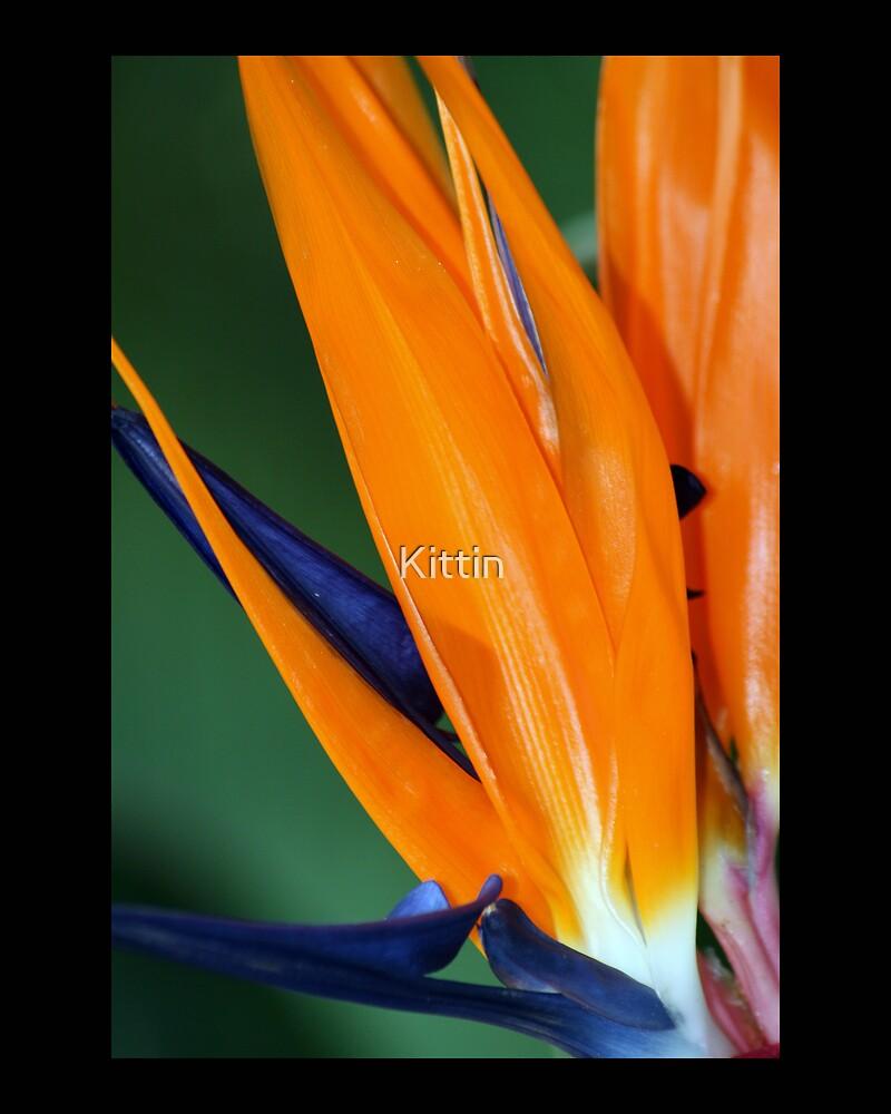 Bird of paradise 02 by Kittin