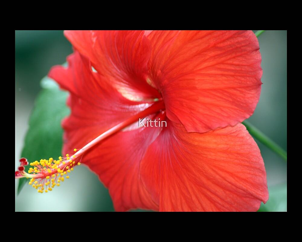 flower 14 by Kittin