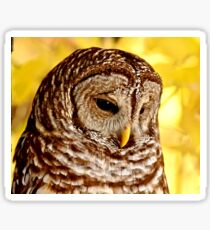 Barred Owl Sticker