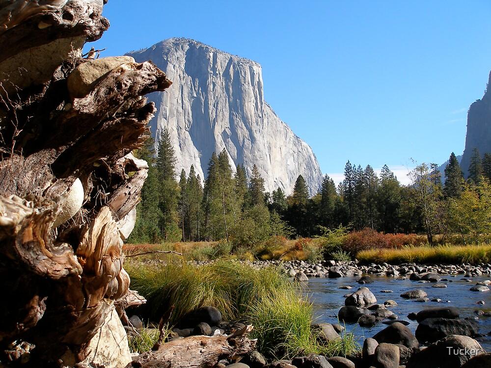 Yosemite,CA by Tucker