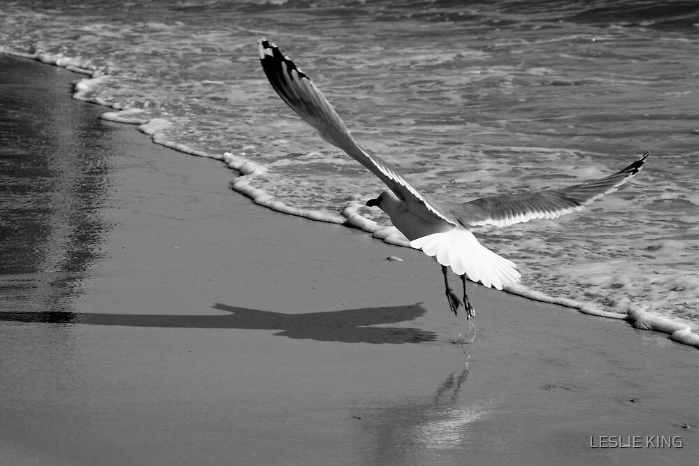 SEAGULL by LESLIE KING