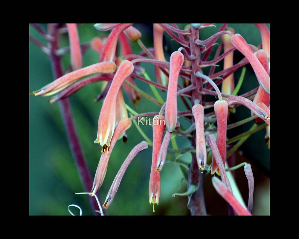 flower 16 by Kittin