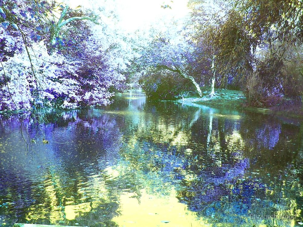 Enchanted Pond by Elizabeth Wood