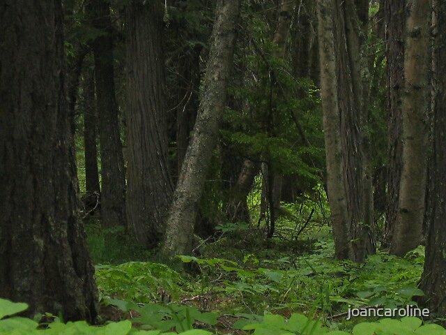 woods by joancaroline