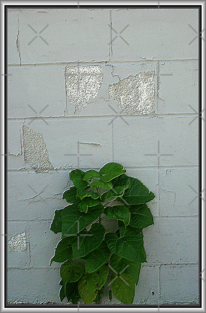 Do I make this wall look good or what?? by Tammy Soulliere