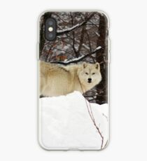 Arctic Wolf Pondering iPhone Case