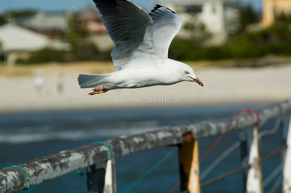 The seagull by Irene Scales