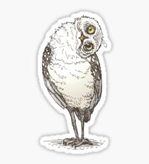 Owl Witness Sticker