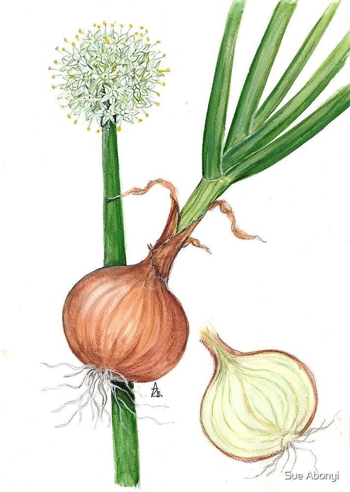 Onion - Allium cepa by Sue Abonyi