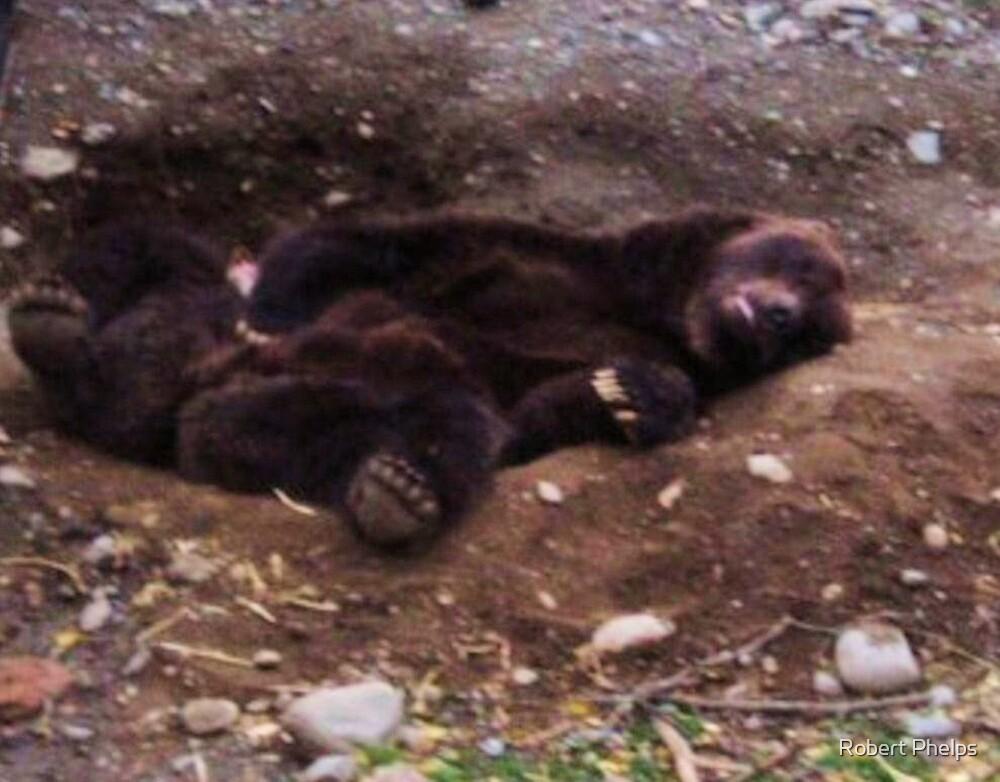Bear Nap by Robert Phelps