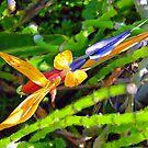 Bird of paradise by Godservant