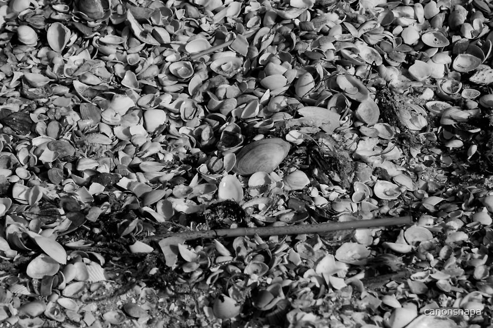 shells by canonsnapa