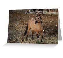 Horse Kiger 1  Greeting Card