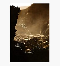 Webs v1 Photographic Print