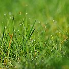 Green & Pleasant Land by smileyjustforyou