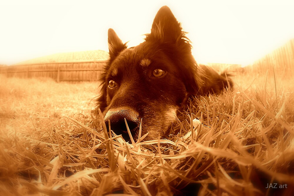 Zero pup!... by JAZ art