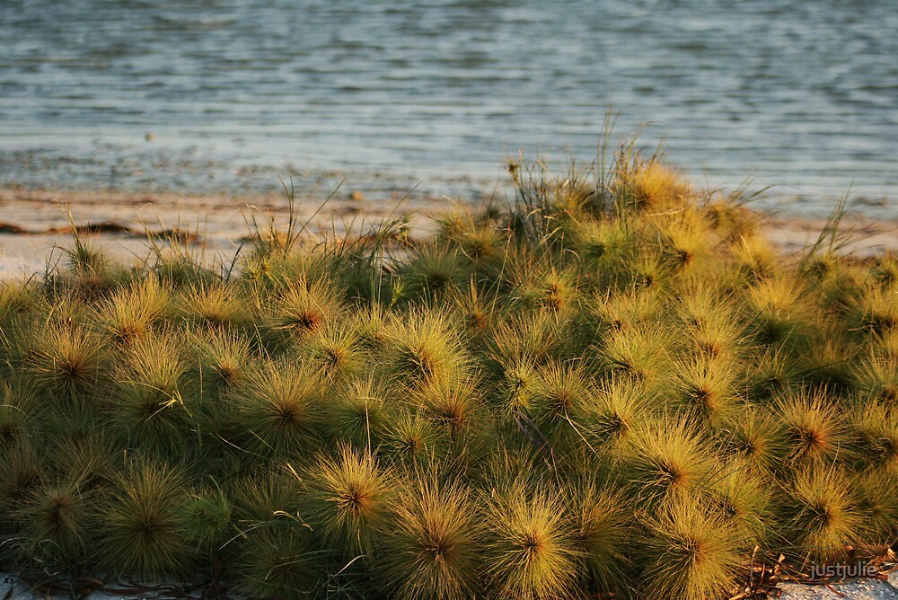 sea flowers by justjulie