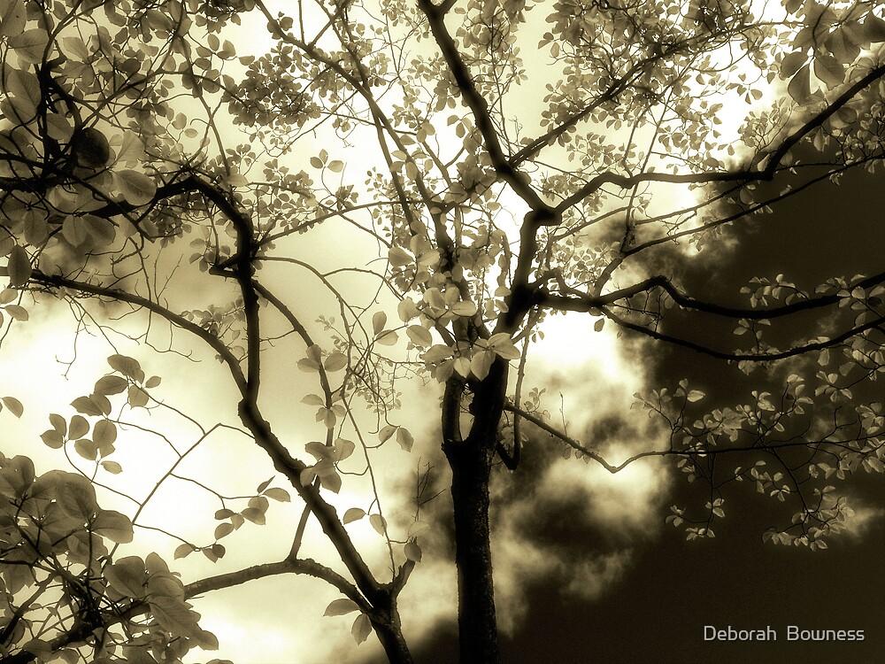 Enlightenment by Deborah  Bowness