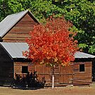 Maple Tree On Fire by f6rider