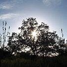 Tree star by Godservant