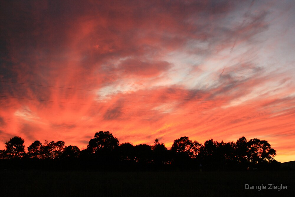Trees Ablaze with the Sunset by Darryle Ziegler