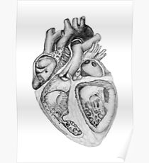 Realistic Heart Illustration with Valves - Pencil Sketch Poster