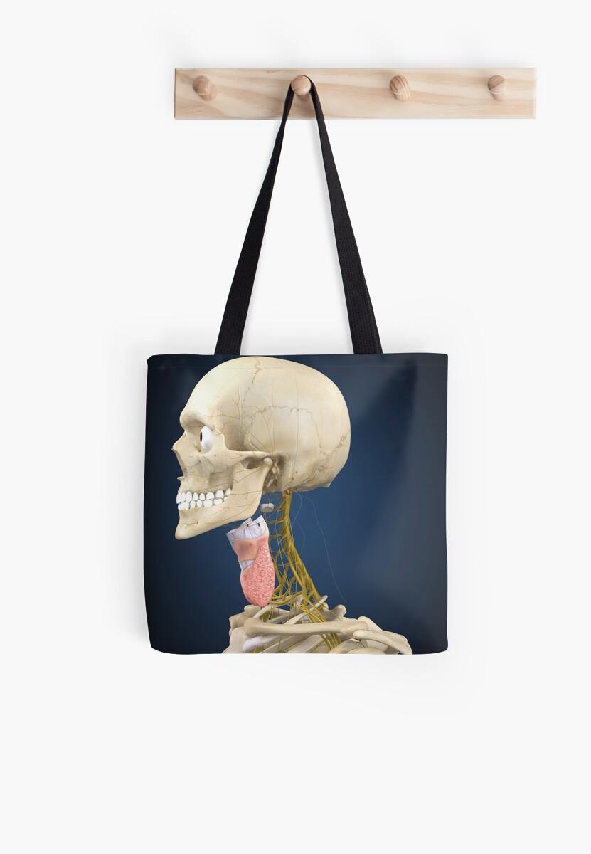 Bolsas de tela «Esqueleto humano con sistema nervioso y órgano ...