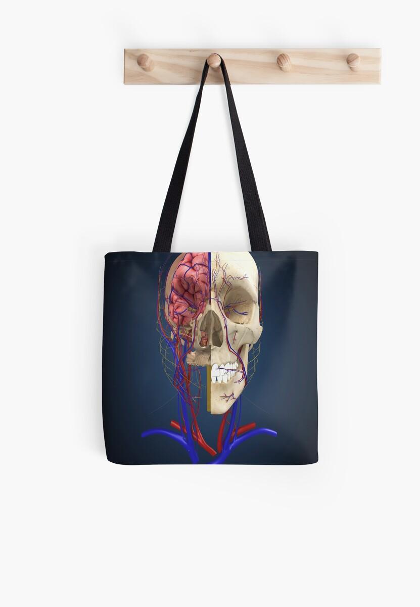 Bolsas de tela «Cráneo humano que muestra el cerebro y el sistema ...
