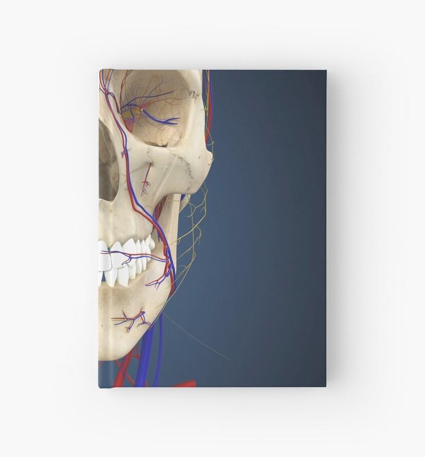 Cuadernos de tapa dura «Cráneo humano que muestra el cerebro y el ...