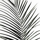 Palm Leaves 7 by Mareike Böhmer