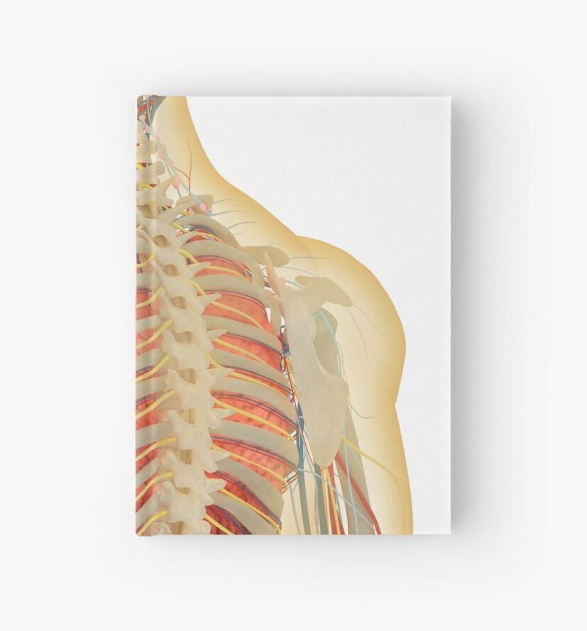 Cuadernos de tapa dura «Cuerpo humano con sistema nervioso, sistema ...