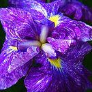 Beautiful Flowers by Dmarie Becker