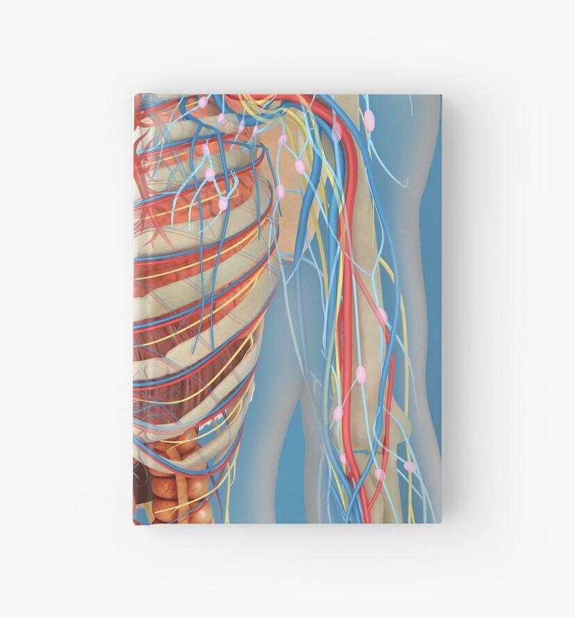 Cuadernos de tapa dura «Cuerpo humano que muestra el corazón y la ...
