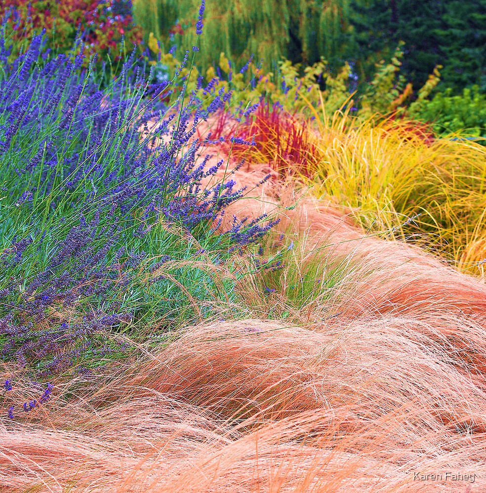 Rushes and Grasses by Karen Fahey