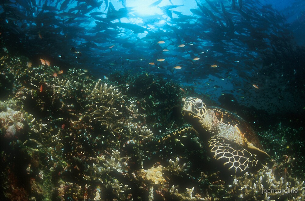 underwater by joancaroline