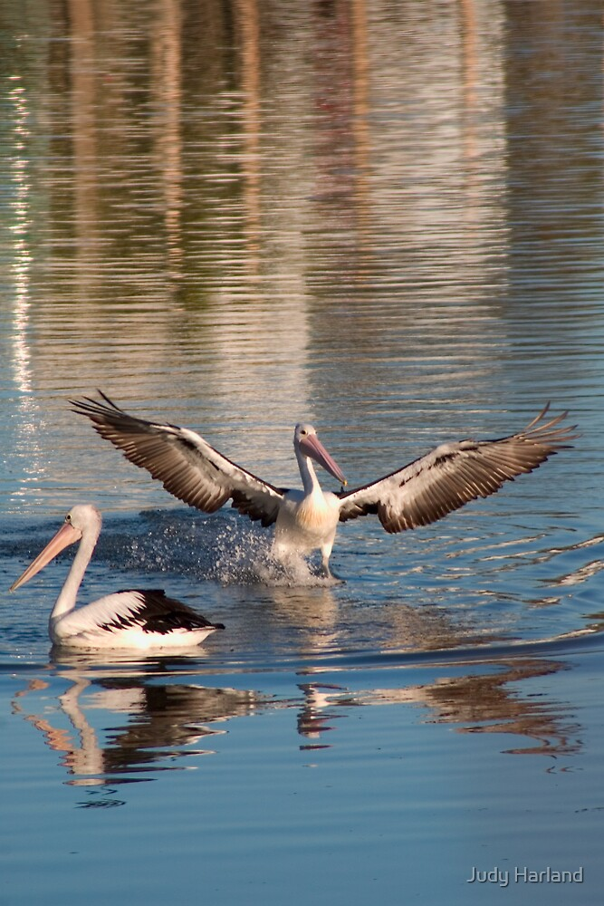 Coming in to Land by Judy Harland